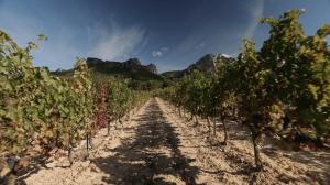 Pressefoto_8_Spanien in 7 Stunden_EMP_Wein_1