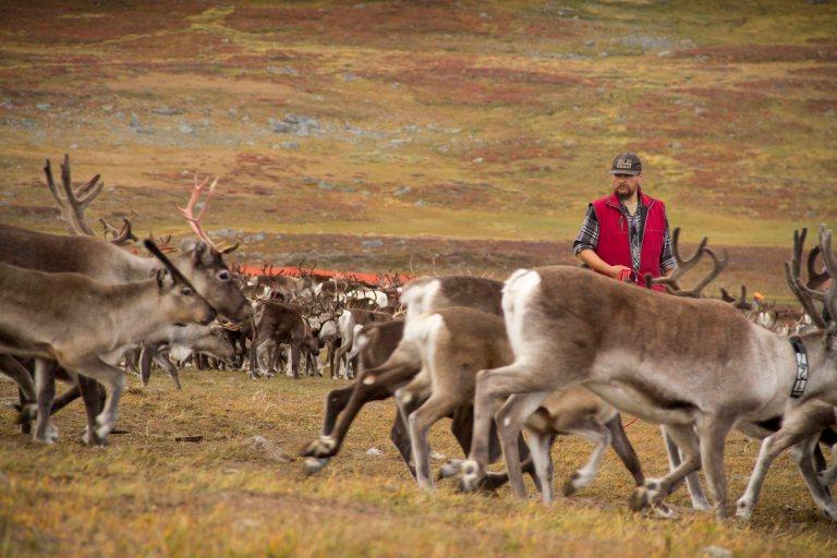 Lappland Sami PeopleTina Rentzsch01small