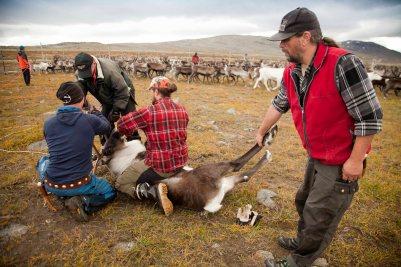 Lappland Sami PeopleTina Rentzsch07small