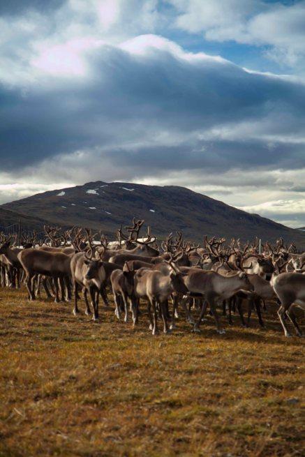 Lappland Sami PeopleTina Rentzsch18small