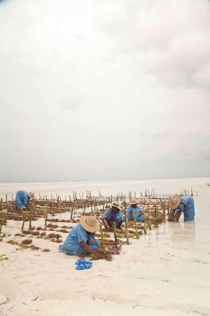 Zanzibar_SeaweedCenterTinaRentzsch_small21